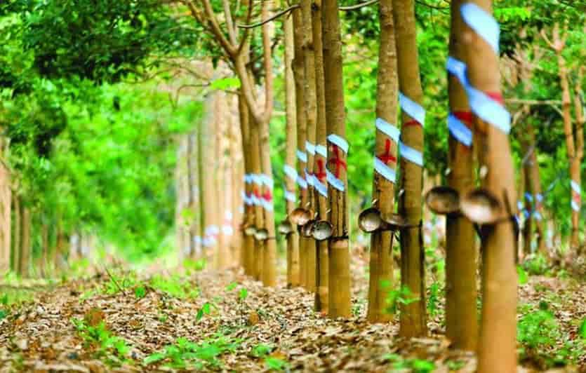 Nguyen-lieu-nem-cao-su-kim-cuong